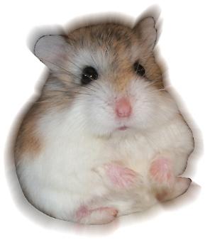 Aula Virtual Curso Hamsters