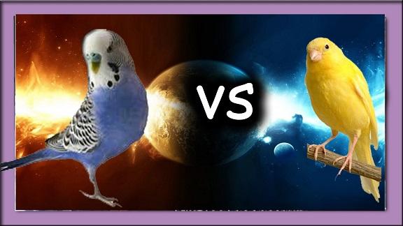 Canarios vs periquitos