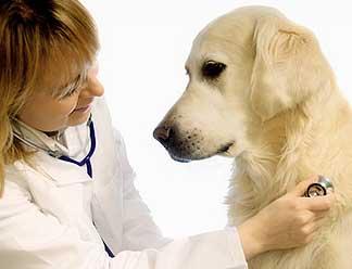 Curso enfermeria veterinaria primeros auxilios animales caninos felinos