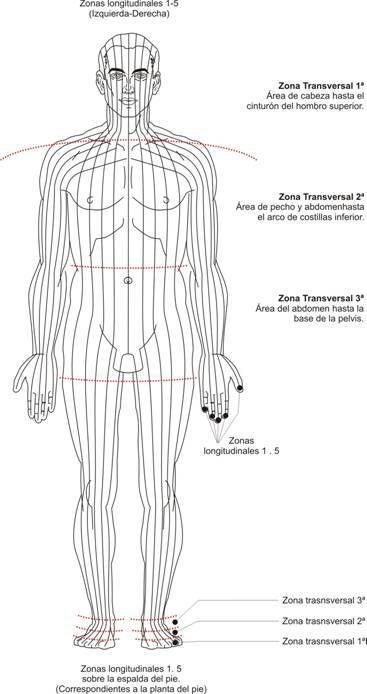 Zonas-longitudinales-correspondencia-con-el-pie