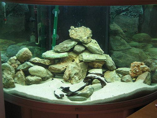rocas en la pecera