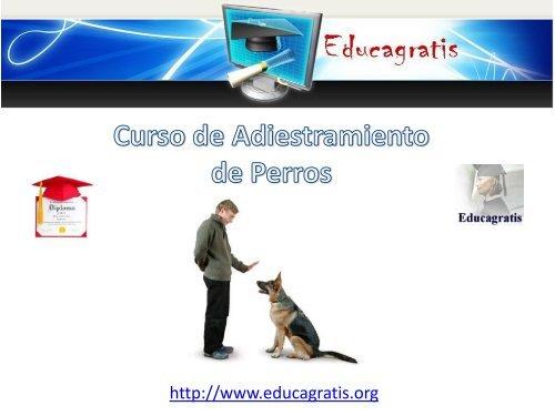 curso-de-adiestramiento-de-perros