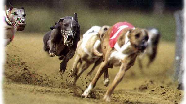 Curso-Gratis-Perro-y-Deporte