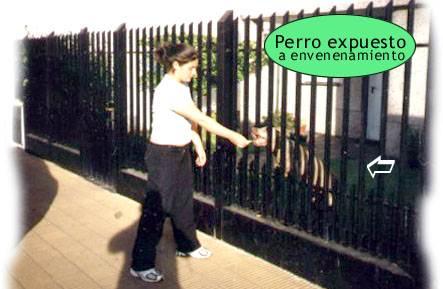 Aula-Gratis-Envenenamiento-Perro