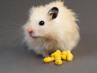 ArchivoAula-Virtual-Curso-Hamsters