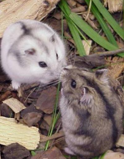 Aula-Virtual-Curso-Hamsters