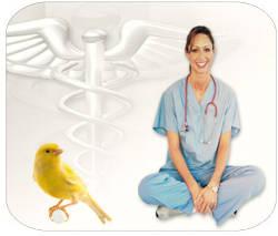 enfermedades canarios especies