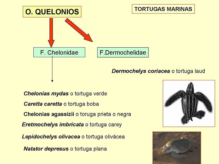 Quelonios