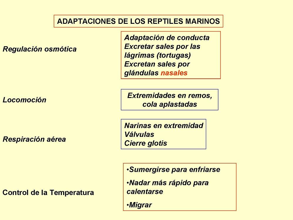Adaptaciones de los Reptiles Marinos