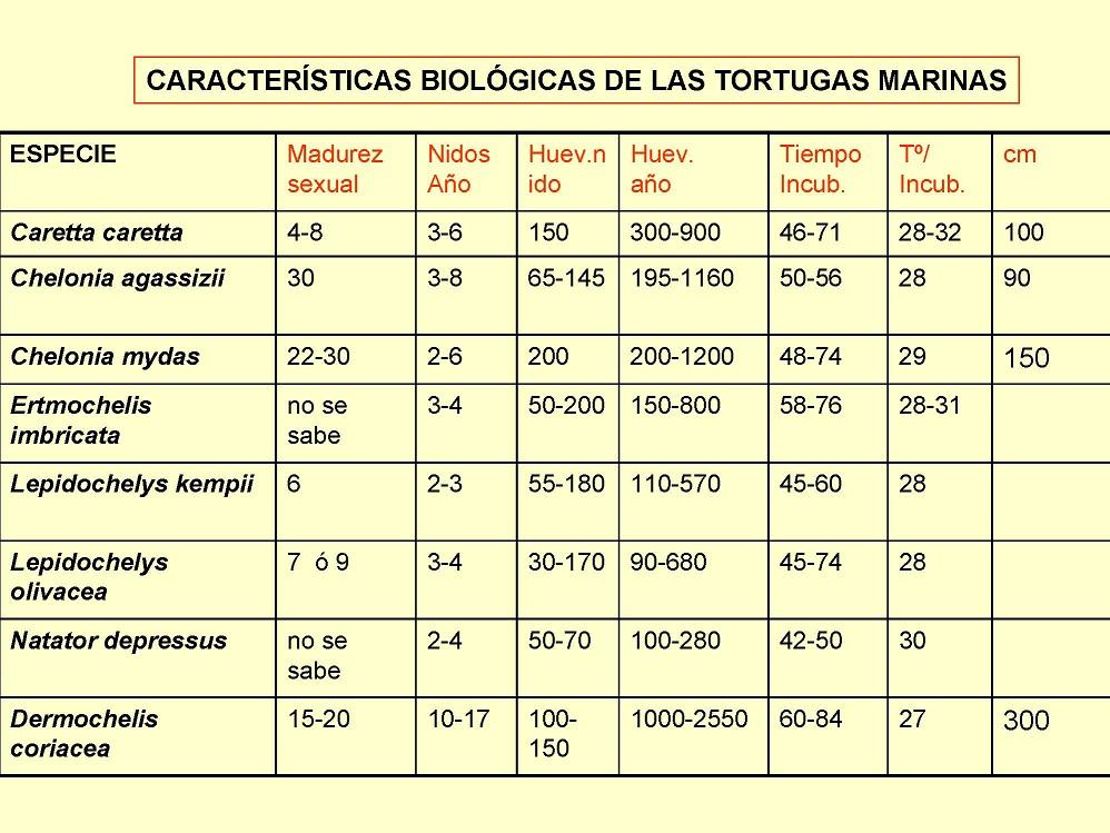 CARACTERÍSTICAS BIOLÓGICAS DE LAS TORTUGAS MARINAS
