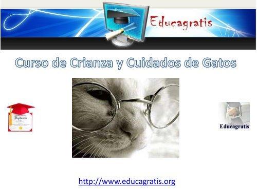 curso-de-crianza-y-cuidados-de-gatos