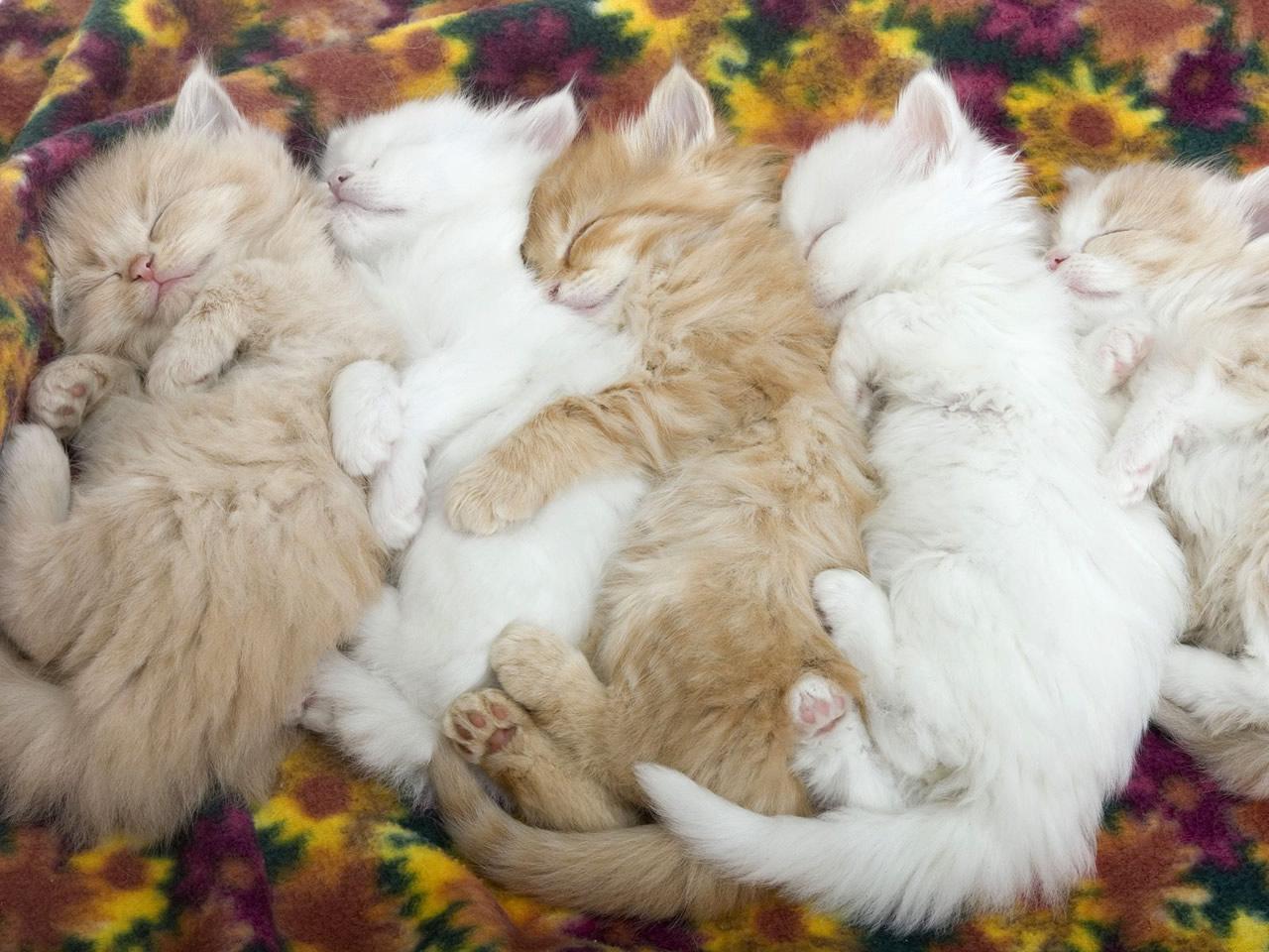 Cuidado Gatos