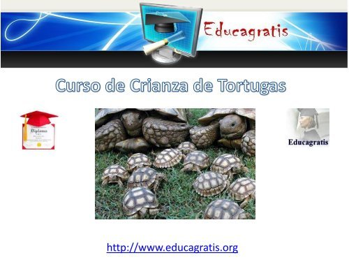 curso-de-crianza-de-tortugas