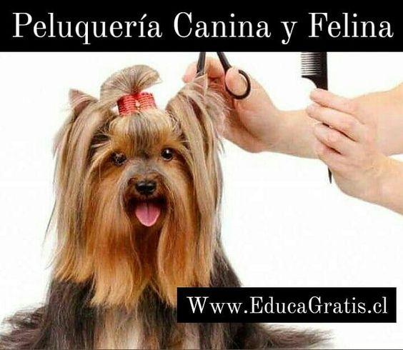 Curso Peluqueria Canina y Felina