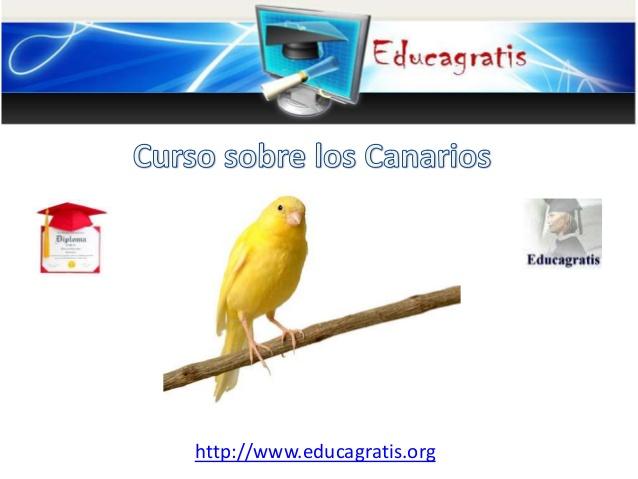 curso-sobre-canarios