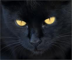 gato negro supersticion