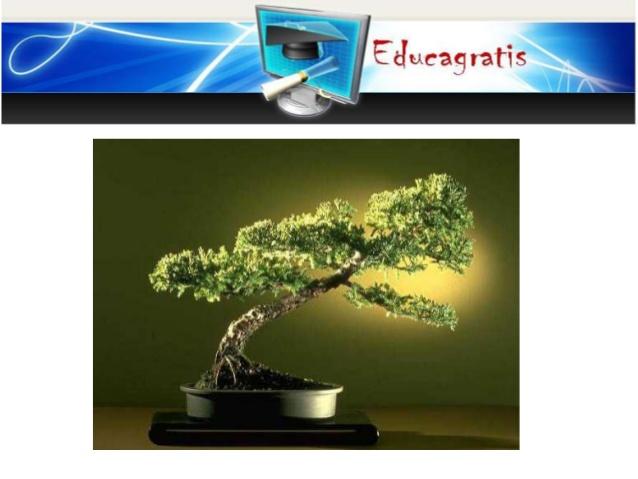 curso gratis sobre bonsai cultivo riego cuidados poda