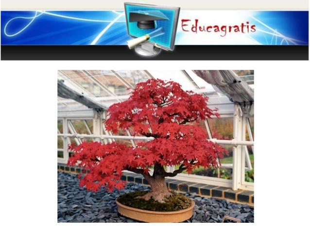 curso-gratis-sobre-bonsai-cultivo-riego-cuidados